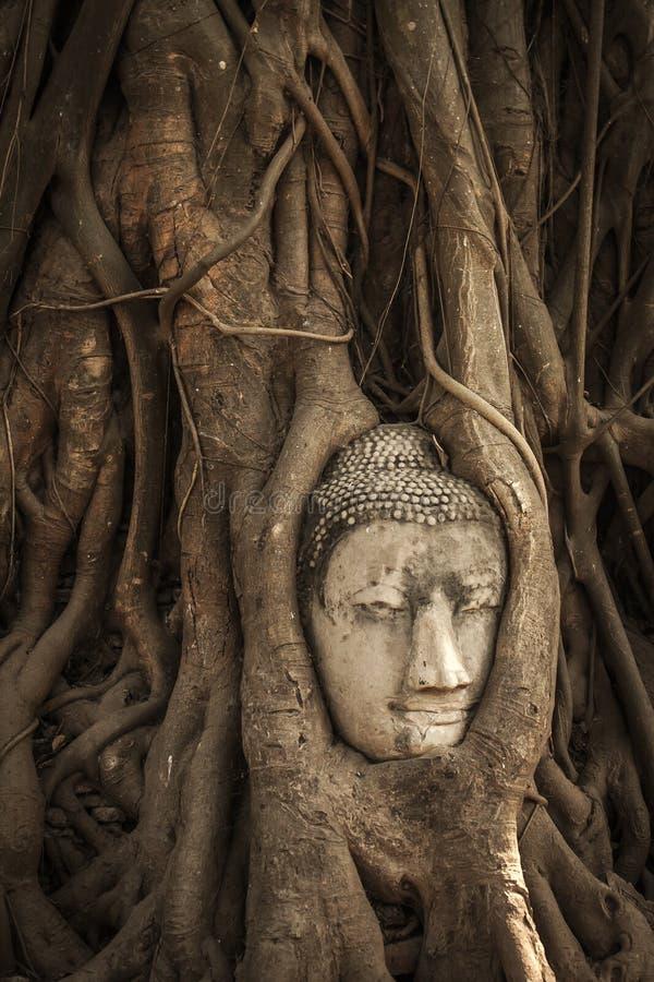 Cabe?a de Buddha em raizes da ?rvore fotos de stock royalty free