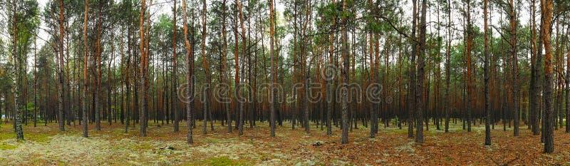 Cabecera del bosque fotografía de archivo libre de regalías