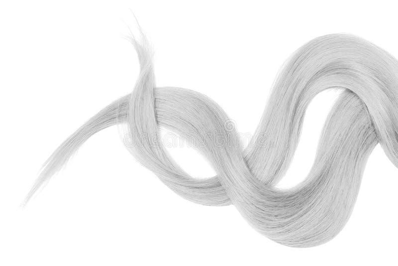Cabelo cinzento isolado no fundo branco Rabo de cavalo bagunçado longo foto de stock