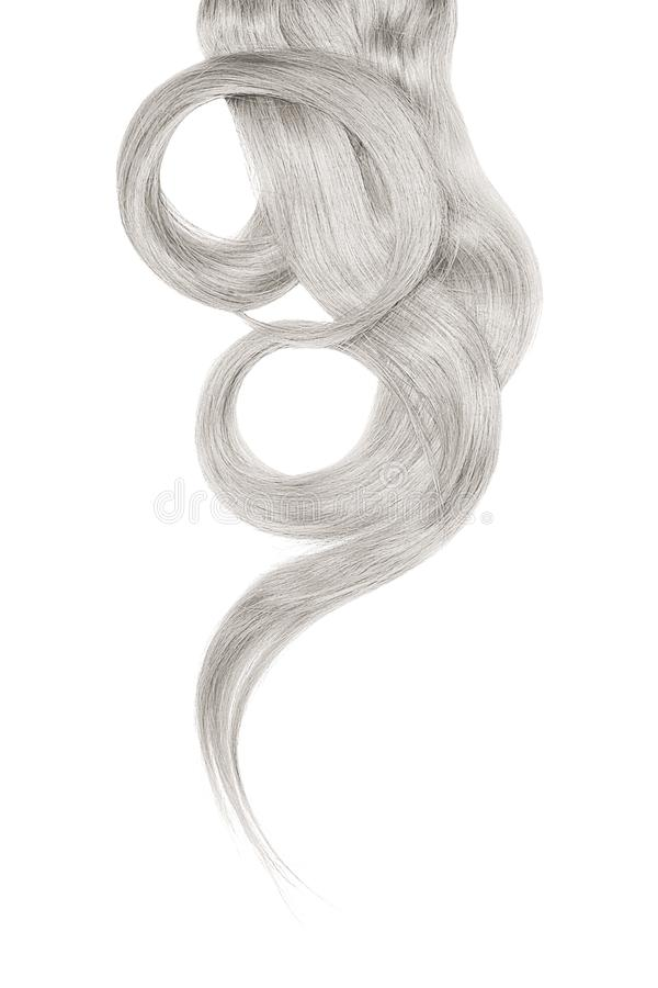Cabelo cinzento isolado no fundo branco Rabo de cavalo bonito longo na forma do círculo imagem de stock