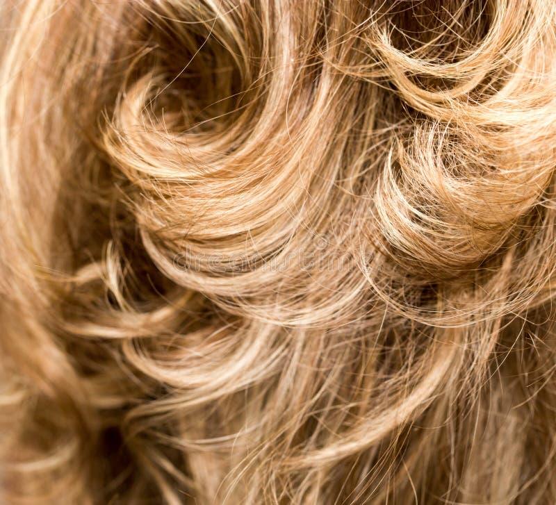 Cabelo Curly hairdressing onda Cabelo natural foto de stock