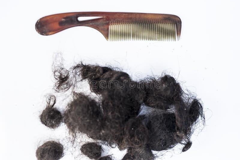Cabelo danificado isolado no branco com um conceito do pente do cabelo dos cabelos de morte fotografia de stock