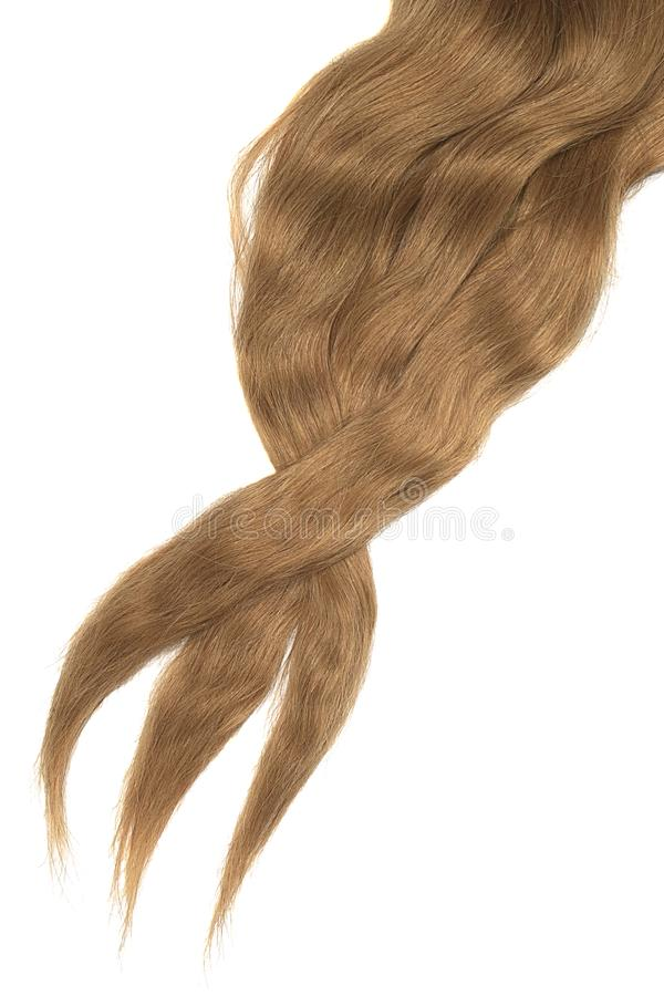 Cabelo de Brown isolado no fundo branco Rabo de cavalo bagunçado longo imagem de stock