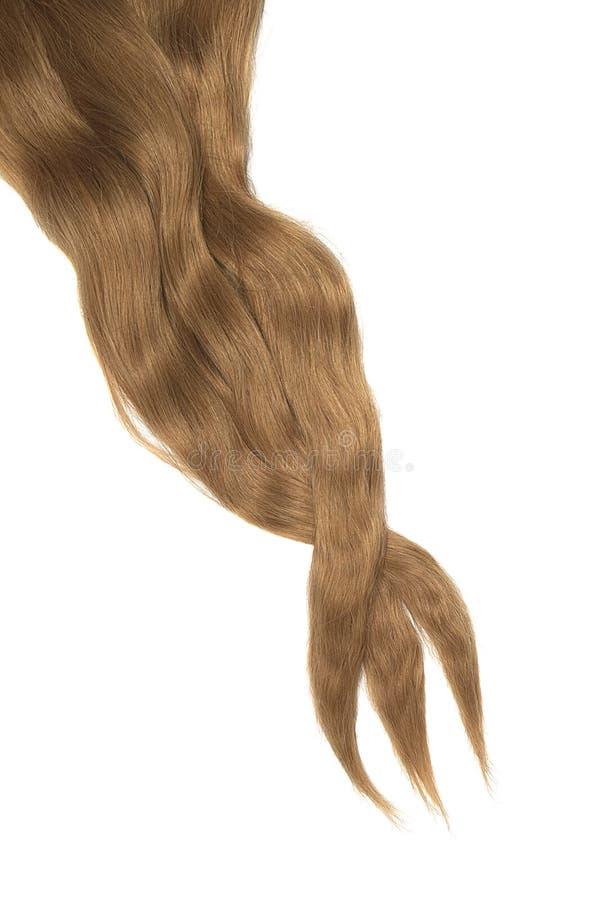 Cabelo de Brown isolado no fundo branco Rabo de cavalo bagunçado longo fotografia de stock