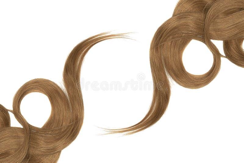 Cabelo de Brown isolado no fundo branco Rabo de cavalo bonito longo na forma do círculo fotografia de stock