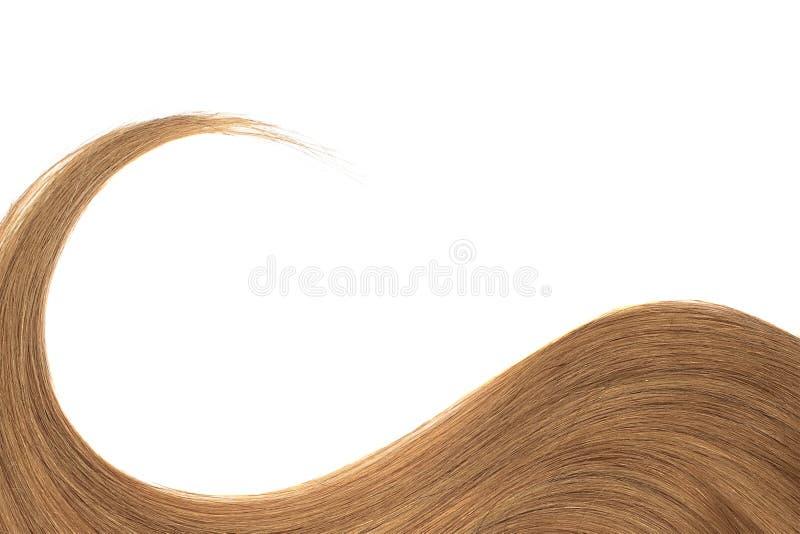 Cabelo de Brown isolado no fundo branco Rabo de cavalo ondulado longo fotografia de stock