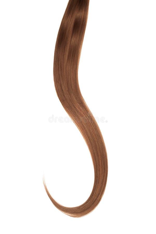 Cabelo escuro de Brown isolado no fundo branco Rabo de cavalo bonito longo fotos de stock