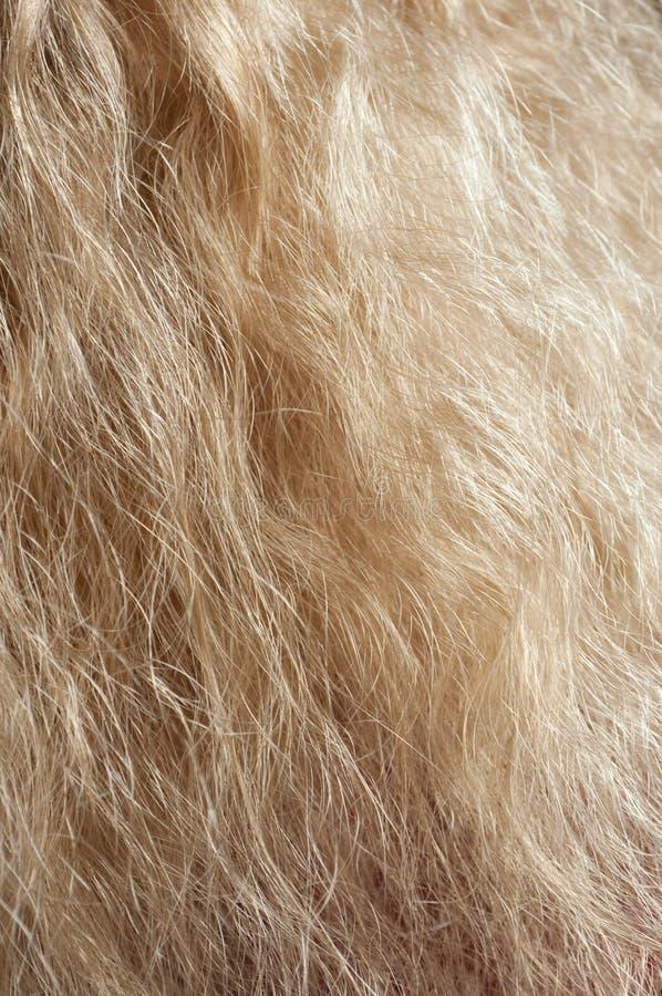 Cabelo fêmea bonito da cor do ouro foto de stock