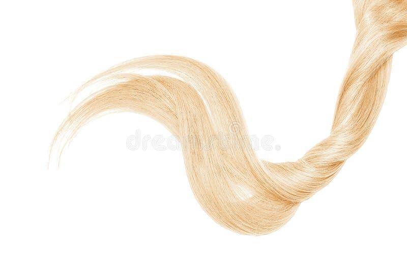 Cabelo louro, isolado no fundo branco Rabo de cavalo bonito longo foto de stock
