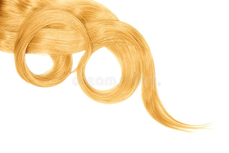 Cabelo louro isolado no fundo branco Rabo de cavalo bonito longo na forma do círculo imagem de stock