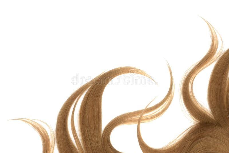 Cabelo marrom bagunçado longo, isolado no fundo branco fotos de stock