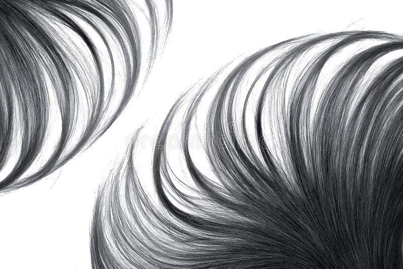 Cabelo preto luxúria isolado no fundo branco fotos de stock royalty free