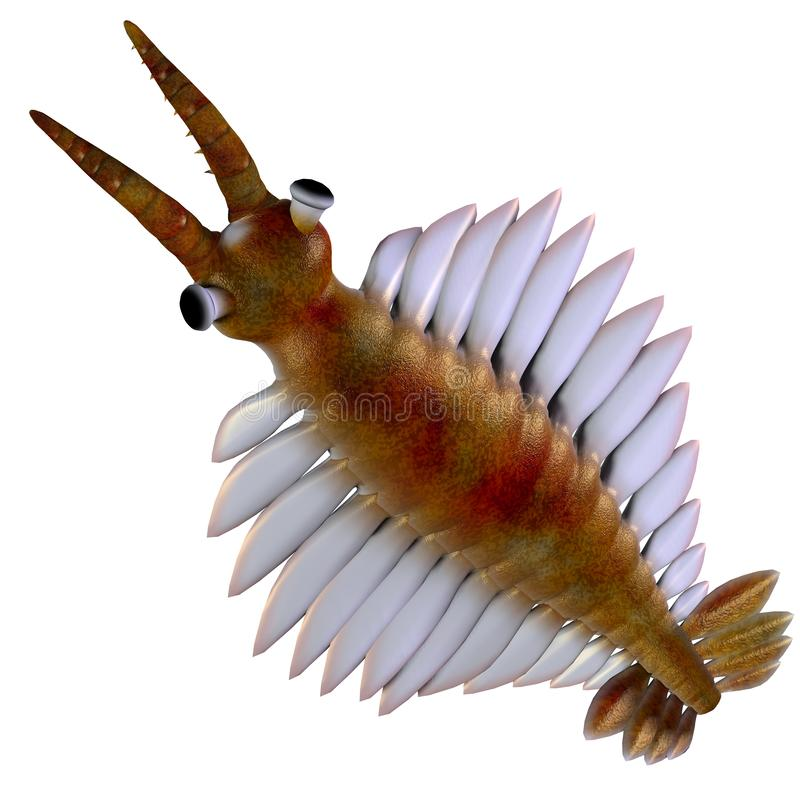 Cabeza cambriana de Anomalocaris libre illustration