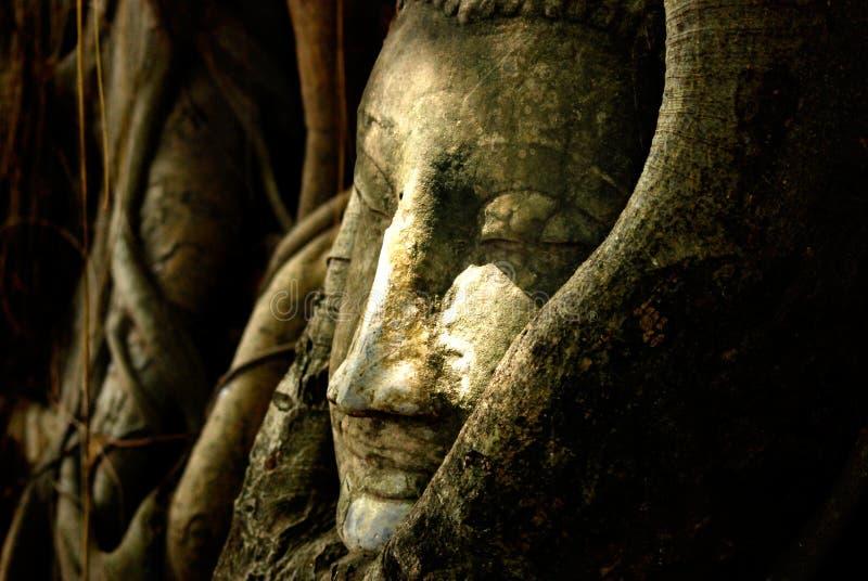 Cabeza de Ayutthaya Buda en ra?ces del ?rbol en el templo de Wat Mahathat en Ayutthaya, Tailandia fotografía de archivo libre de regalías
