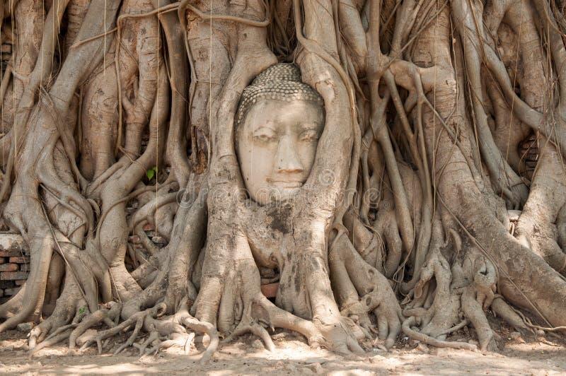 Cabeza de Buda fotos de archivo libres de regalías