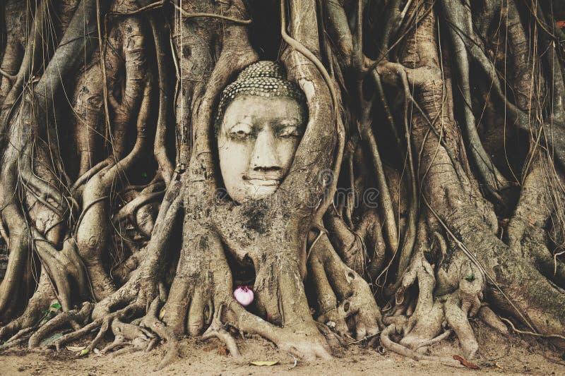 Cabeza de Buda en Ayuttaya imagen de archivo libre de regalías