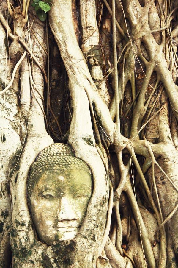 Cabeza de Buda en raíces del árbol en Wat Mahathat, Ayutthaya, Tailandia Phra Nakhon Sri Ayutthaya es el patrimonio mundial de la imagen de archivo libre de regalías