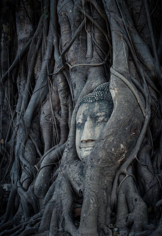 Cabeza de Buda, Tailandia imagen de archivo