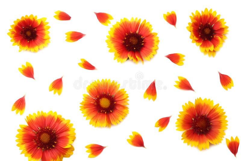 Cabeza de flor amarilla aislada en el fondo blanco Visi?n superior imagen de archivo libre de regalías