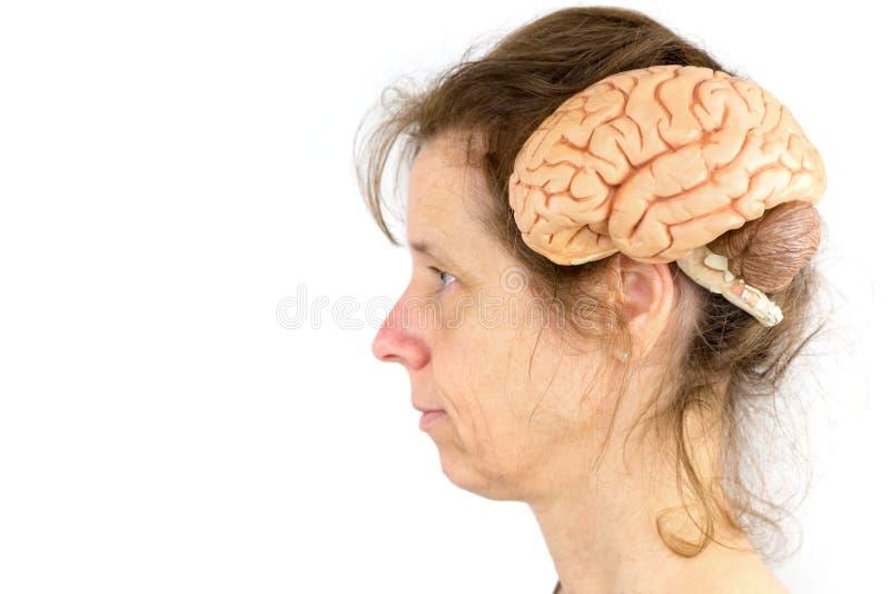 Cabeza de la mujer con el modelo de cerebros humanos imágenes de archivo libres de regalías