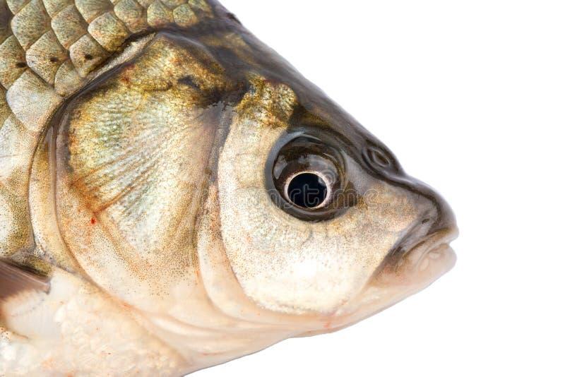 Cabeza de los pescados imágenes de archivo libres de regalías