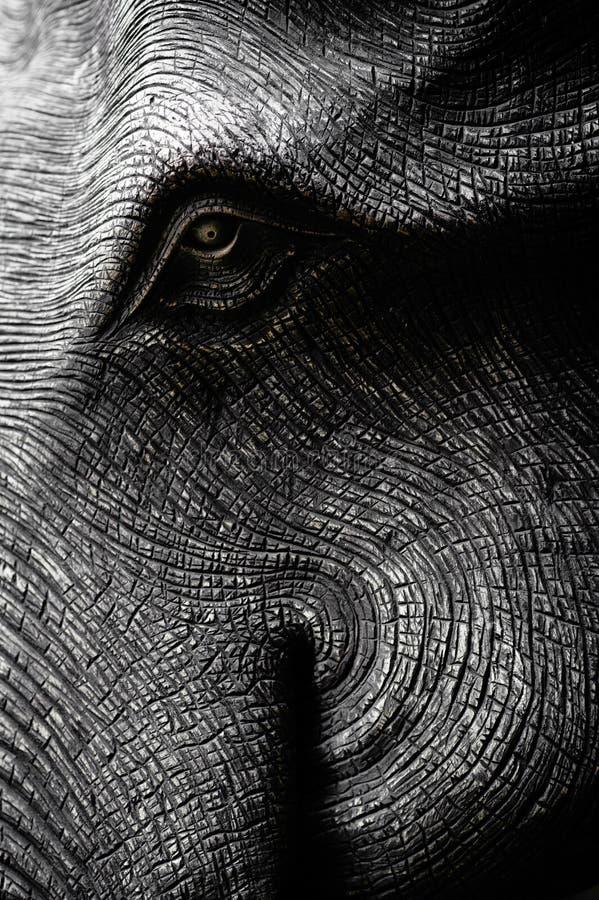 Cabeza del elefante en blanco y negro imagenes de archivo