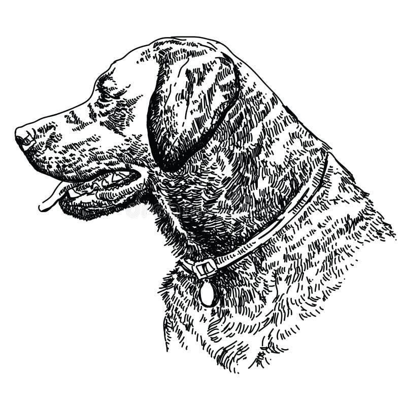 Cabeza del labrador retriever ilustración del vector