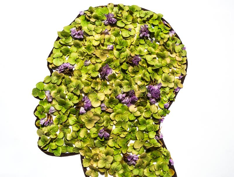 Cabeza del ser humano con las hojas imagen de archivo