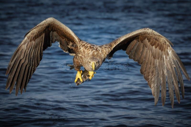 Cabeza en águila
