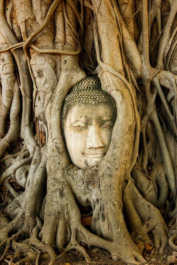 Cabeza en raíces del árbol, Wat Mahathat, Ayutthaya de Buda fotografía de archivo