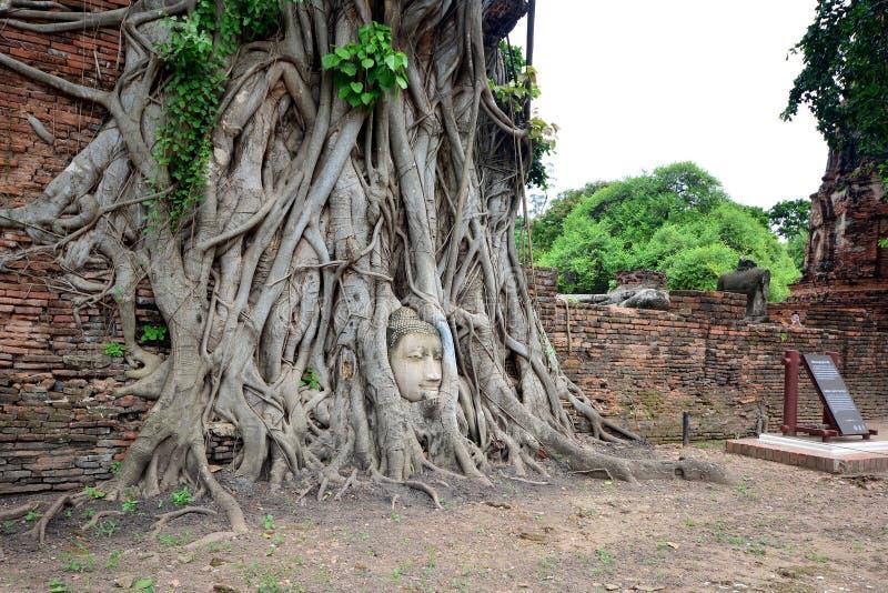 Cabeza en raíces del árbol, Wat Mahathat, Ayutthaya, Tailandia de Buda imagen de archivo libre de regalías