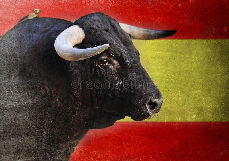 Cabeza española del toro con los cuernos grandes que miran peligroso aislada en la bandera de España foto de archivo