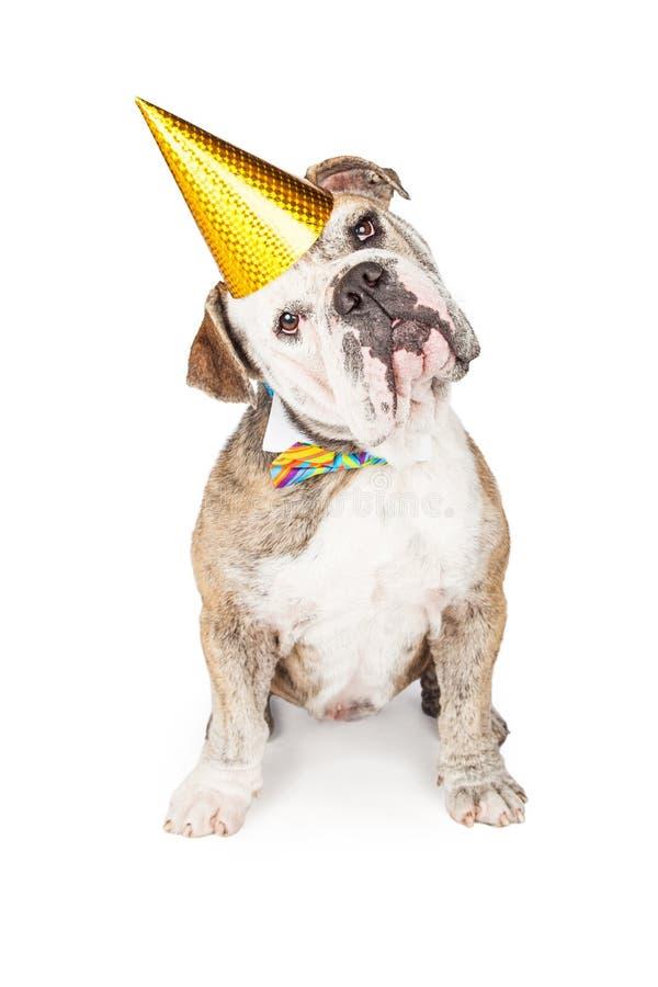 Cabeza inclinable del dogo divertido del cumpleaños fotos de archivo