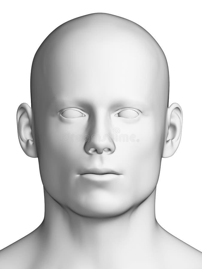 Cabeza masculina blanca libre illustration