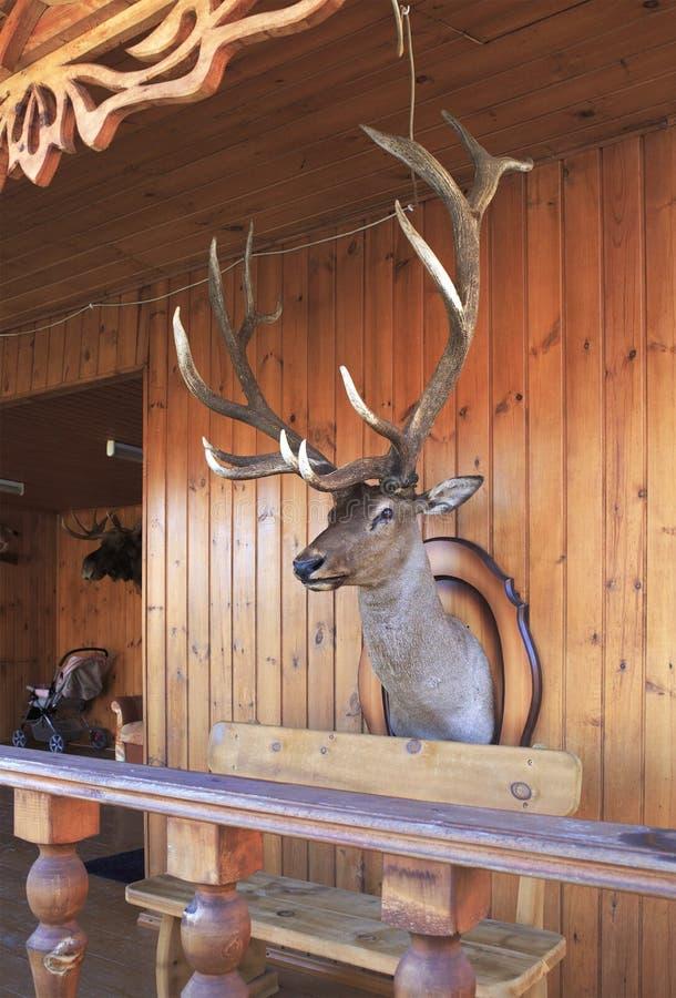 Cabeza rellena de los ciervos foto de archivo libre de regalías
