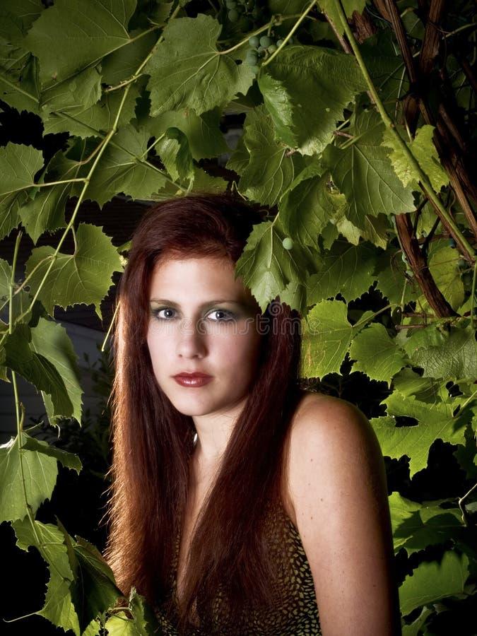 Cabeza roja entre las hojas de la uva imagenes de archivo