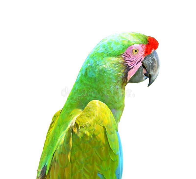 Cabeza verde y alas del loro aisladas en el fondo blanco imágenes de archivo libres de regalías