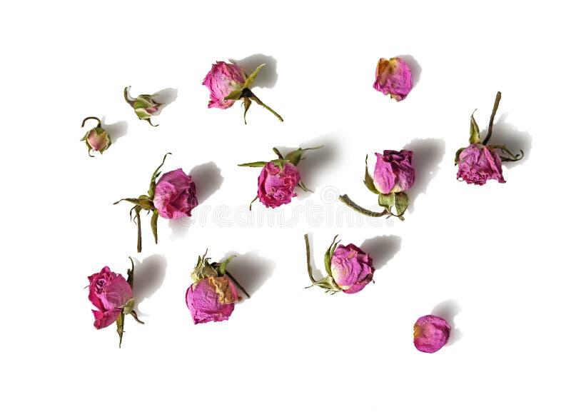 Cabezas de flor descoloradas secadas de la rosa del rosa aisladas en el fondo blanco con la sombra Libro de recuerdos, papel de e foto de archivo