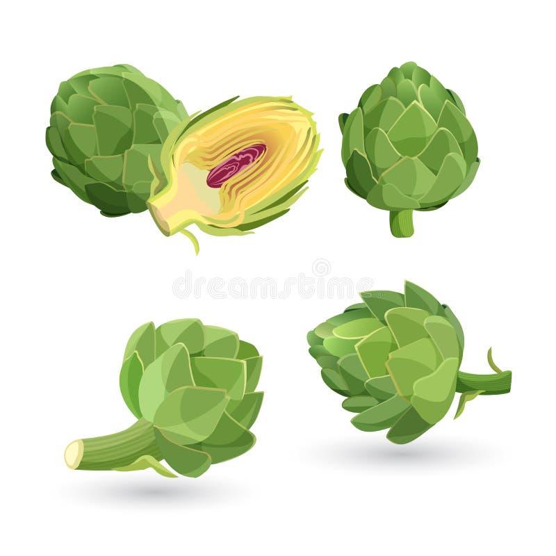 Cabezas de flor verdes de la alcachofa aisladas Ejemplo del vector de la verdura comestible ilustración del vector