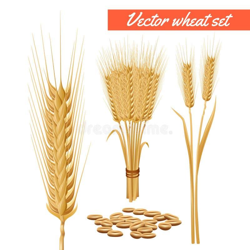 Cabezas de la planta del trigo y cartel del grano stock de ilustración