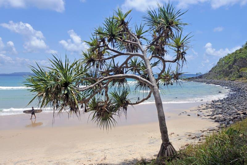 Cabezas de Noosa de la bahía del árbol del té fotografía de archivo libre de regalías