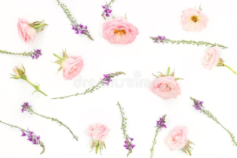Cabezas rosadas hermosas de las rosas en fondo rosado imagen de archivo