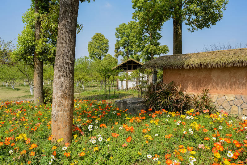 Cabin and enclosure in flowering spring at sunny noon. Chengdu,China royalty free stock photo