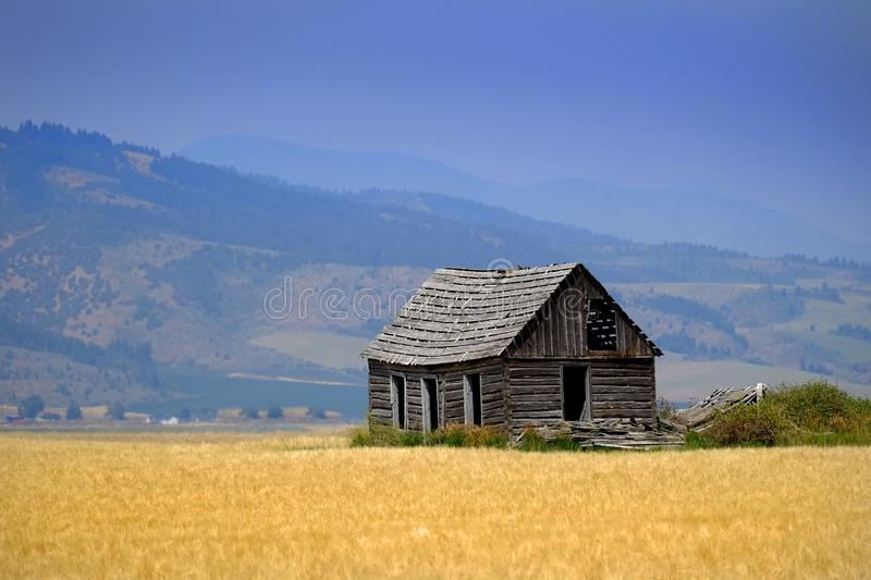 Cabin Old Homestead on Farmground Field of Grain royalty free stock photography