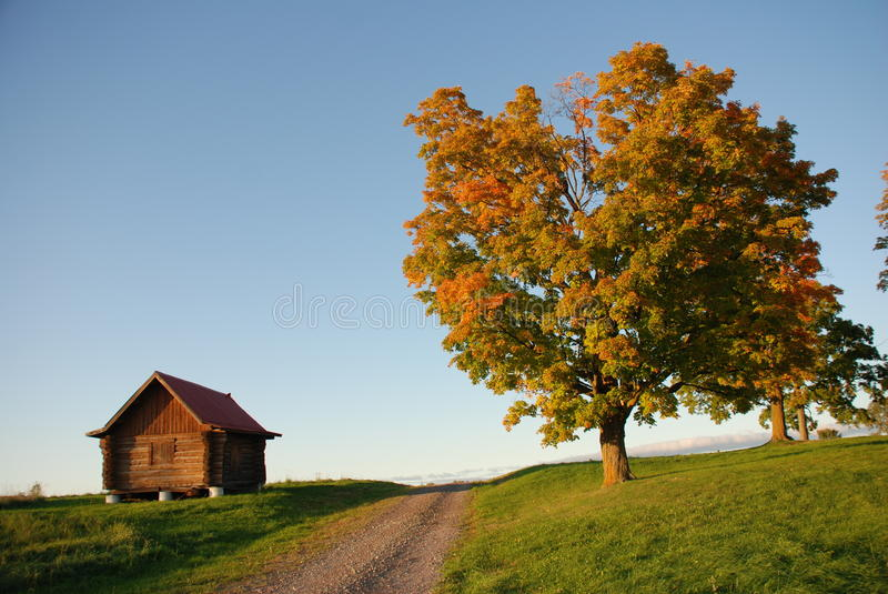Download Cabin And Tree, Taken Near Sundown In Autumn Stock Photo - Image: 11366900