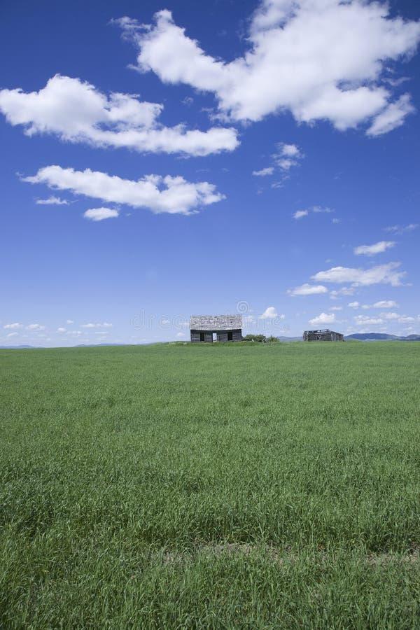 Cabina abbandonata e campo verde fotografia stock libera da diritti