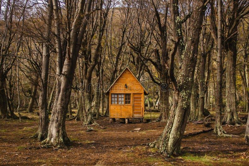 Cabina di ceppo nella Patagonia argentina della Terra del Fuoco della foresta immagini stock