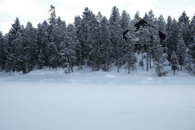 Cabina en el tiempo de Forest Woods Pine Trees Winter cubierto en nieve fotografía de archivo