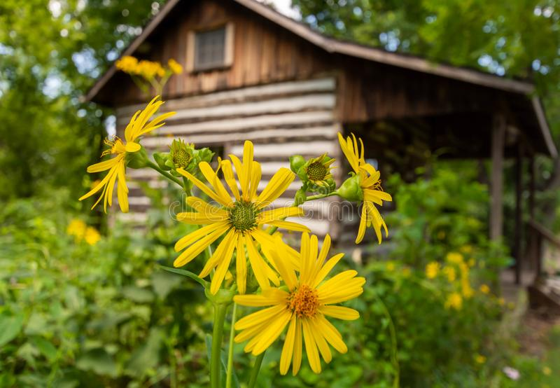 Cabina gialla di ceppo e di Daisys immagini stock libere da diritti