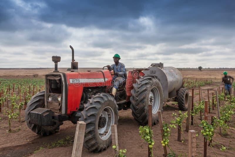 CABINDA/ANGOLA - 9 de junho de 2010 - fazendeiro africano no trator para cruzar a plantação dos tomates imagem de stock